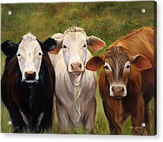 Cow Painting Of Three Amigos Acrylic Print by Cheri Wollenberg