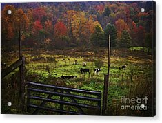 Acrylic Print featuring the photograph Cow Pasture In Autumn by Debra Fedchin