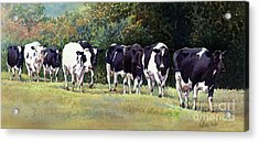 Cow Trail Acrylic Print by Anthony Forster