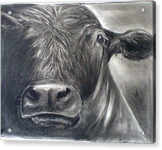Acrylic Print featuring the drawing Cow View by J L Zarek