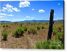 Cowboy Country Acrylic Print by Tim Rice