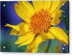Cowpen Daisy No. 5 Acrylic Print