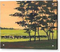 Cows 6 Acrylic Print by J Reifsnyder