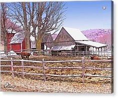 Cows At Jenne Farm Acrylic Print