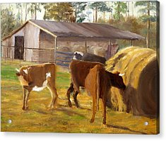 Cows Hay And Barn In Louisiana Acrylic Print