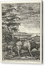 Cows In A Landscape, Hendrick Hondius Acrylic Print