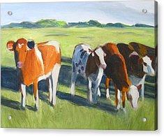 Happy Cows  Acrylic Print