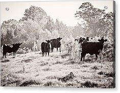 Cows Acrylic Print by Karen Broemmelsick