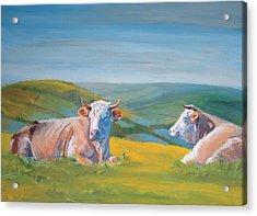 Cows Lying Down Painting Acrylic Print