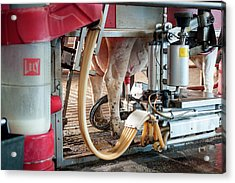 Cow's Udder In Milking Machine Acrylic Print by Aberration Films Ltd