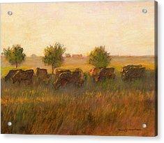 Cows1 Acrylic Print