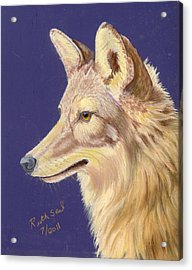 Coyote 2 Acrylic Print by Ruth Seal