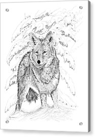 Coyote Acrylic Print by Carl Genovese