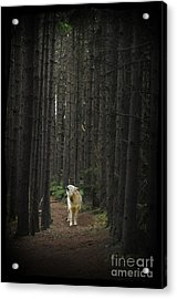 Acrylic Print featuring the photograph Coyote Howling In Woods by Dan Friend