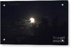 Coyote Moon Acrylic Print by Polly Anna