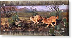 Acrylic Print featuring the painting Coyote Run With Boarder by Rob Corsetti