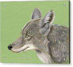 Coyote Acrylic Print