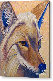 Coyote Summer Acrylic Print
