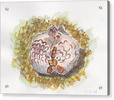Cozy Chickens Acrylic Print by Julie Maas