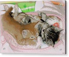 Cozy Kittens Acrylic Print by Heidi Manly