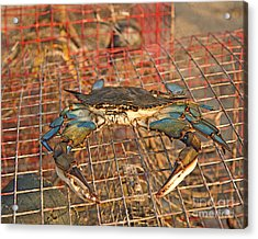 Crab Got Away Acrylic Print