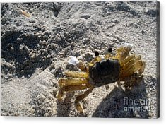 Acrylic Print featuring the photograph Crab On The Look-out by Megan Dirsa-DuBois