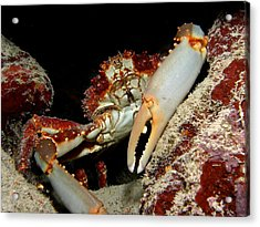 Crab Pose Acrylic Print by Nina Banks