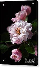 Crabapple Flowers Acrylic Print