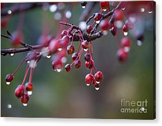 Crabapples In The Mist Acrylic Print