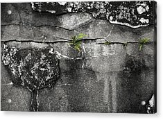 Crack Of Life Acrylic Print by Stellina Giannitsi