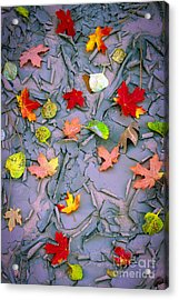 Cracked Mud And Leaves Acrylic Print by Inge Johnsson