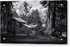 Cracker Barn And Gnarled Southern Red Cedar Acrylic Print