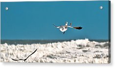 Acrylic Print featuring the photograph Cracker Tracker by DigiArt Diaries by Vicky B Fuller