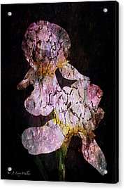 Crackled Iris Abstract Acrylic Print by J Larry Walker