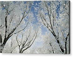 Crackling Cold Acrylic Print by Steve Smith