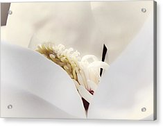 Acrylic Print featuring the photograph Cradled by Janie Johnson