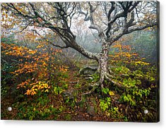 Craggy Gardens North Carolina Blue Ridge Parkway Autumn Nc Acrylic Print