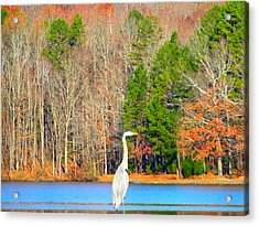 Crane And Color Acrylic Print