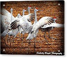 Crane Ballet  Acrylic Print