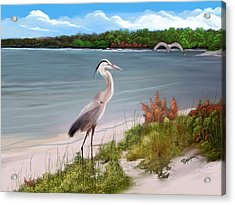Crane By The Sea Shore Acrylic Print
