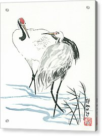 Crane Couple Acrylic Print