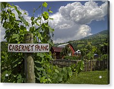 Crane Creek Vineyard Acrylic Print by Debra and Dave Vanderlaan