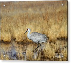 Acrylic Print featuring the photograph  Solitary Crane In The Field by Ruth Jolly