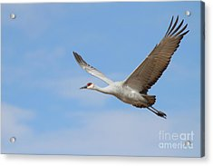 Acrylic Print featuring the photograph Crane In The Skies by Ruth Jolly