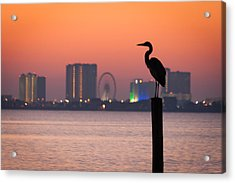 Crane On A Pier Acrylic Print by Tim Stanley