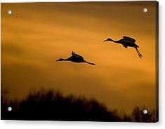 Cranes At Sunset Acrylic Print by Larry Bohlin
