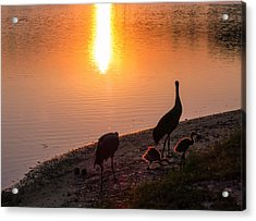 Cranes At Sunset Acrylic Print by Zina Stromberg