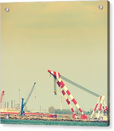 Cranes Acrylic Print by Gabriela Insuratelu