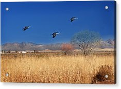 Acrylic Print featuring the photograph Cranes In Flight by Barbara Manis