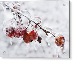 Crab Apples On Icy Branch Acrylic Print by Elena Elisseeva
